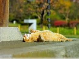 рыжий кот песни,