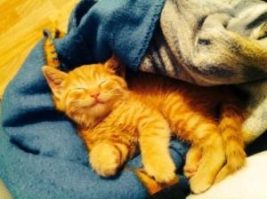 рыжий котенок приносит в дом радость, богатство и счастье