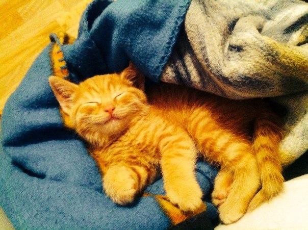 к чему снится маленький рыженький котёнок