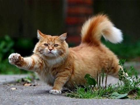рыжий кот мурлыка большой