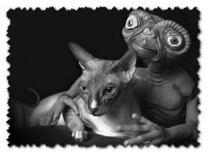 Откуда появились коты на земле