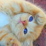 рыжий котенок, кот