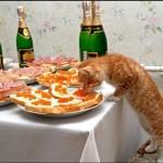 рыжий кот кушает со стола