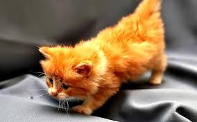 как назвать рыжего котенка с любовью