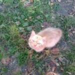 рыжий кот мурлыка пушистый