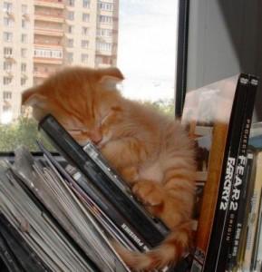 К чему снится кот рыжий?