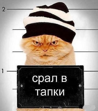 кот метит территорию