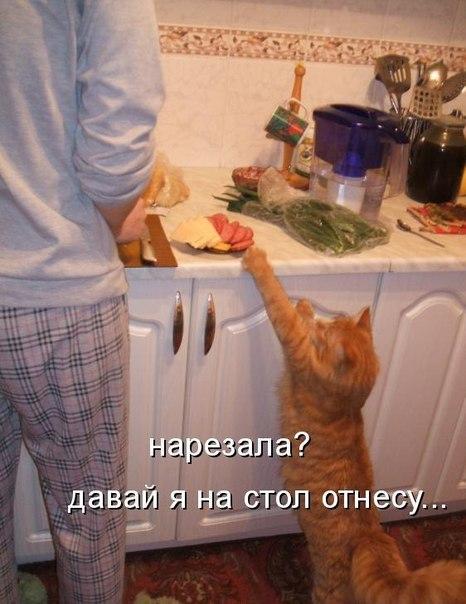 как отучить кошку воровать