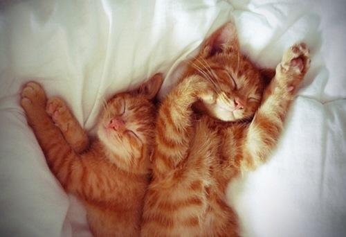 дать кличку рыжему коту