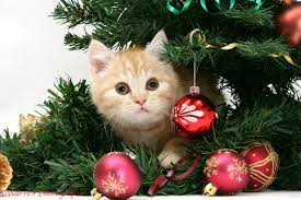 к чему снится рыжий кот зимой