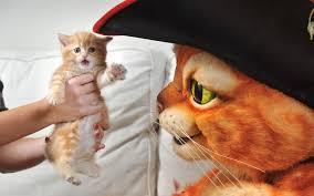 как лучше назвать рыжего котенка или кошечку
