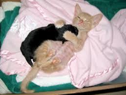 рыжий кот и черный щенок