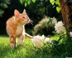 как назвать рыжего кота и цветок