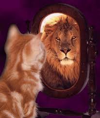 кот рыжий король