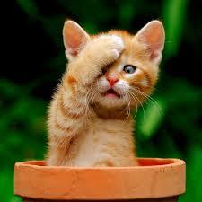 назвать рыжего котенка