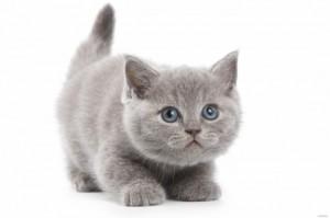 как назвать кота котенка, дать кличку котенку