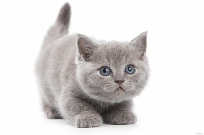 Как можно назвать кота котенка
