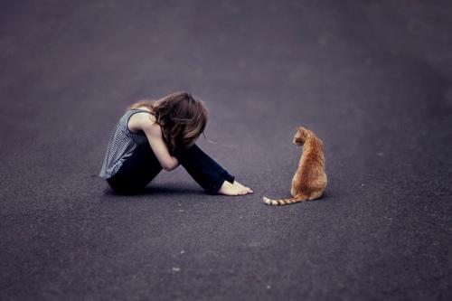 рыжий кот и девушка друг