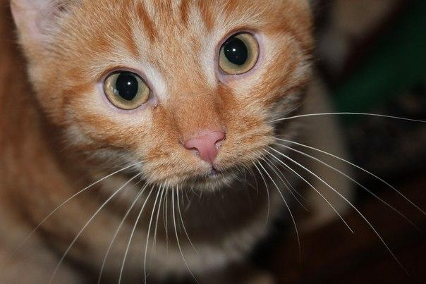 Как назвать рыжего котенка мордочку?