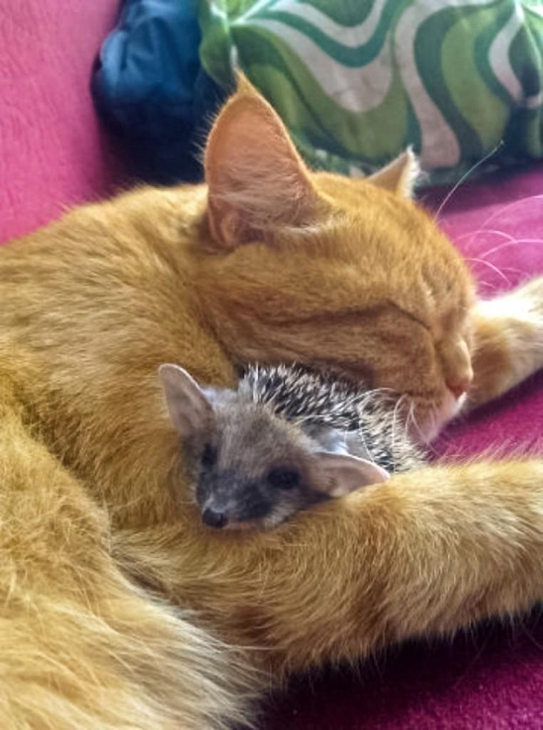 ежик и кот