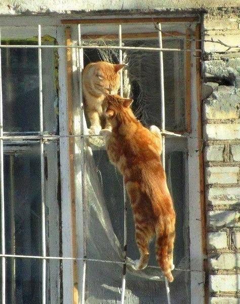 рыжий кот пришел к кошке