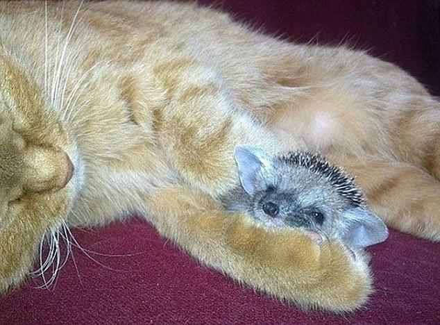 кот и ежик