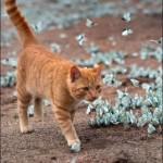 красивый рыжий кот и бабочки