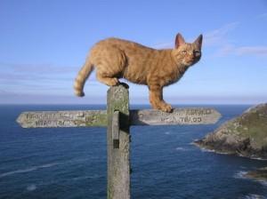 рыйжи кот болльшой