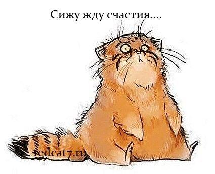 http://redcat7.ru/wp-content/uploads/2013/04/aWs5TMmRKyc.jpg