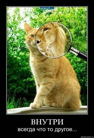 рыжий кот, как лев