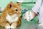 Вакцинация кошек.