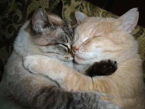 Любовные картинки с котами