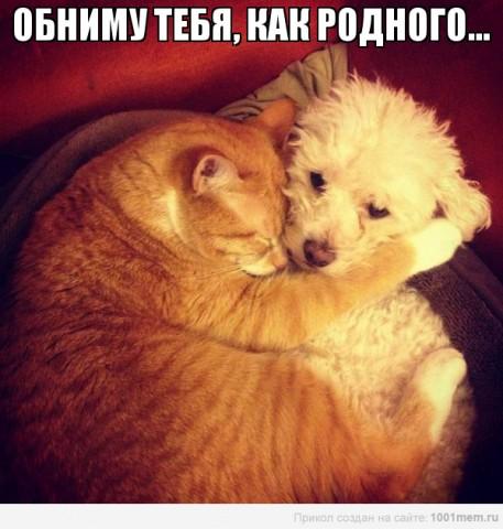 рыжий кот и пес