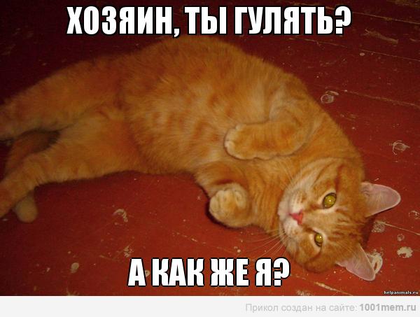 рыжий кот гулять хочет с хозяином