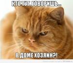История одного озорного рыжего кота, который довел хозяина до изнеможения…