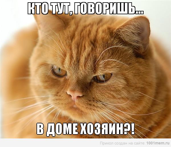 рыжий кот грозный