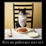 Почему даже уличные коты не едят сухой корм?