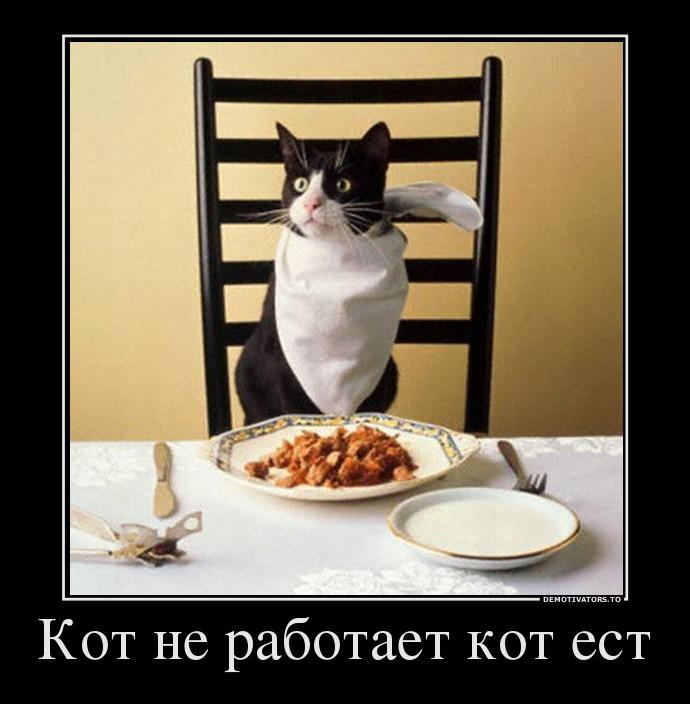 3544352-5425-5_kot-ne-rabotaet-kot-est