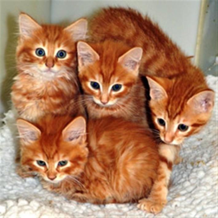 рыжие-котята-5647356843-543