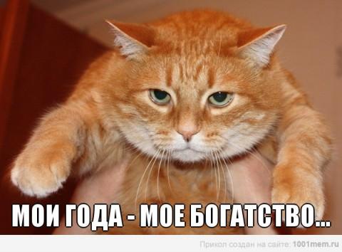 рыжий кот и его года прикол