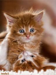 рыжие котята милые