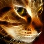 кошка рыжая огненная