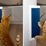 кот рыжий точит когти