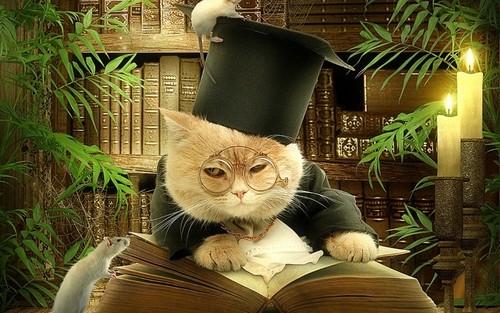 кот рыжий ученый читает