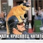 мотиватор-рыжий-кот-катается