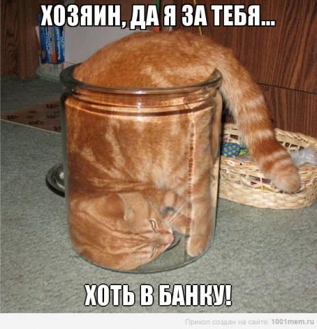 рыжий кот лезет в банку