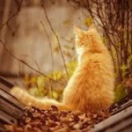 рыжий кот смотрит вдаль