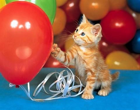 рыжий котеночек с шариками