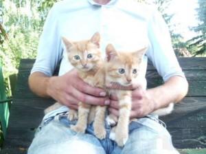 почему рыжие котята любят сидеть на коленях у хозяина