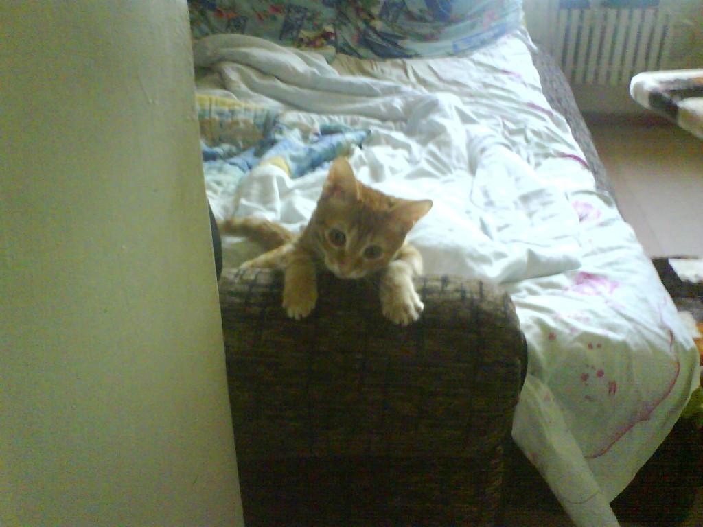 красивый веселый рыжий котенок, рыжий кот